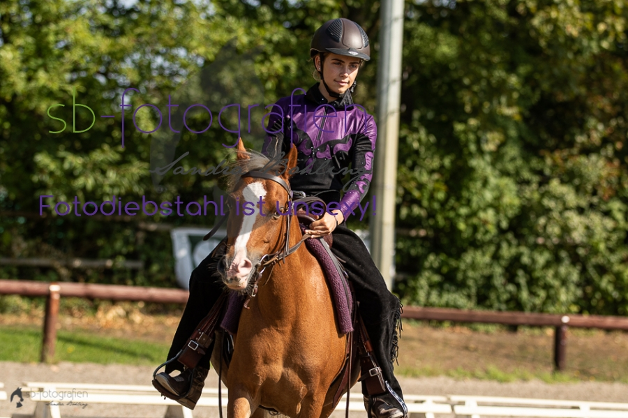 Foto 7 / 2018 EWU Biblis Walk Trot Pleasure