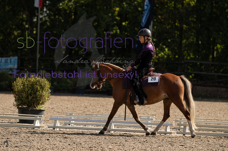 Foto 2 / 2018 EWU Biblis Walk Trot Pleasure