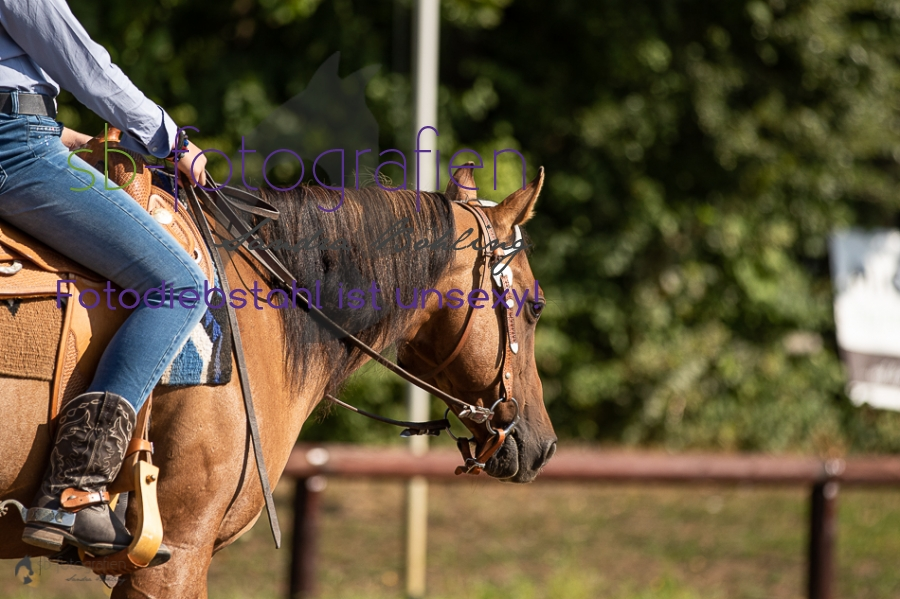 Foto 10 / 2018 EWU Biblis Walk Trot Pleasure