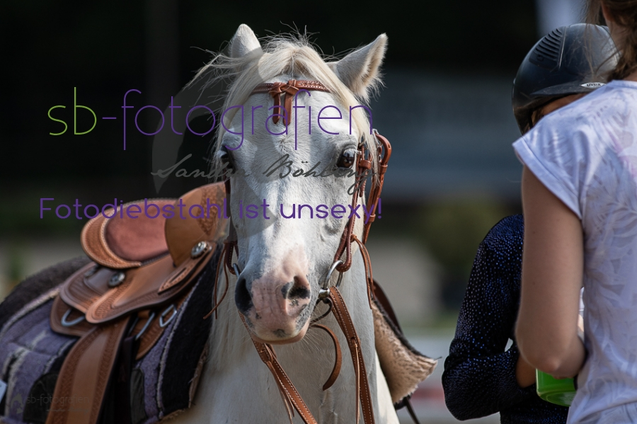 Foto 51 / 2019 EWU Walk-Trot Western Pleasure